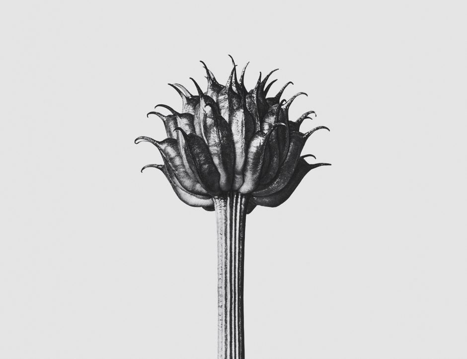 Flor logo de LOEWE SOLO